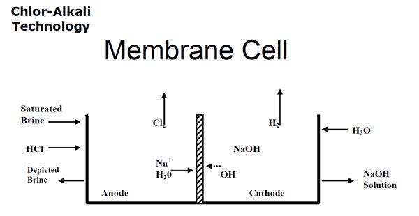 membrane cell